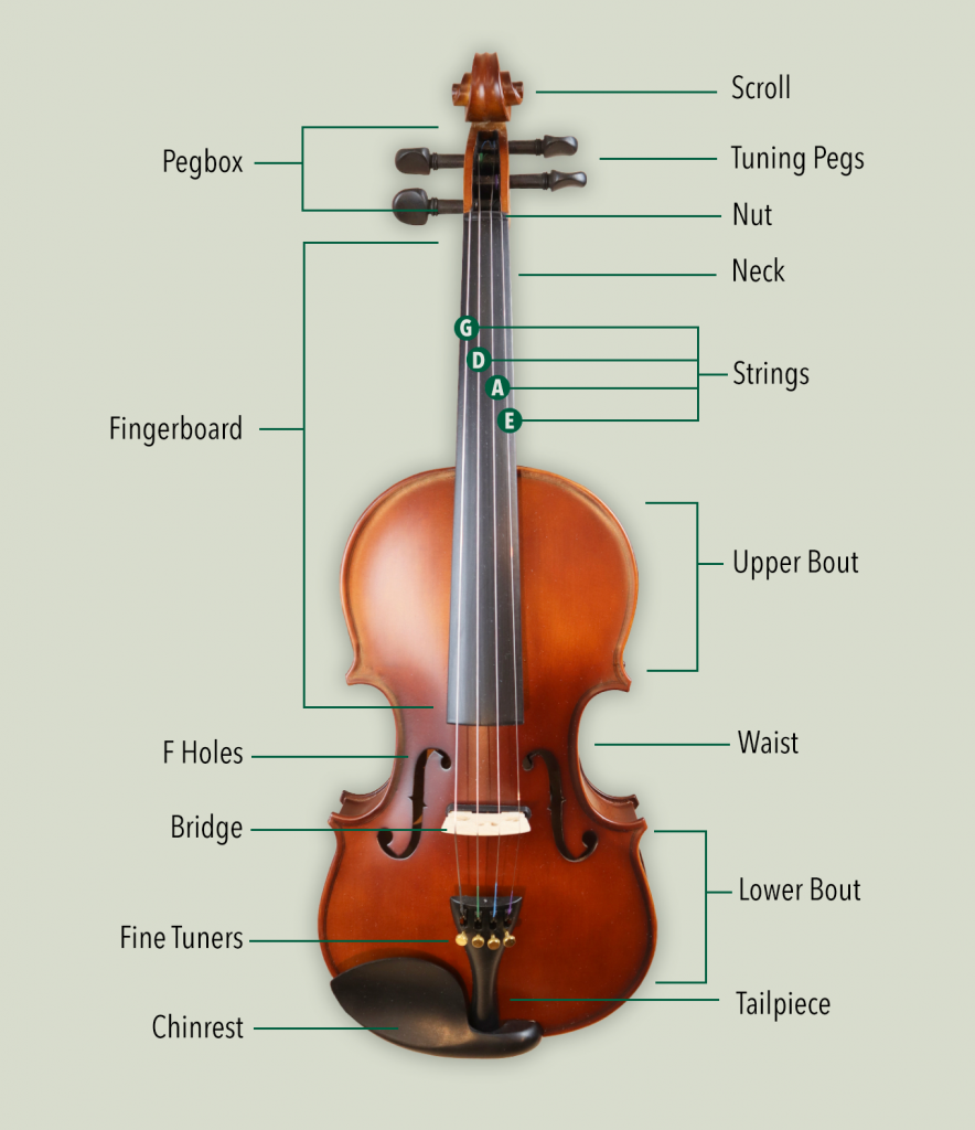 Diagram showing the different parts and anatomy of the violin