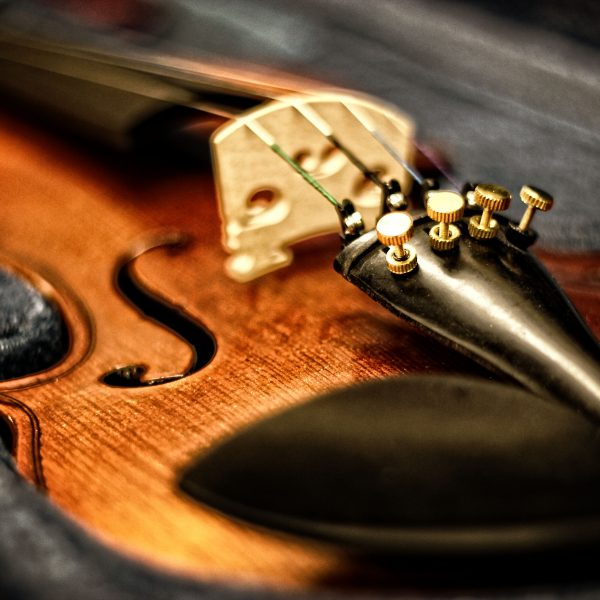 Anatomy and structure of the violin or fiddle